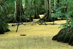 Terraba Sierpe Mangroves