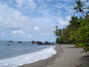 White sand, palm-lined beaches