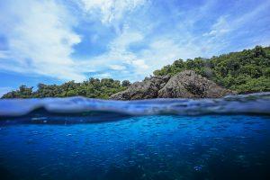 Tour a la Reserva Biologica Isla del Caño, Pacifico Sur, Costa Rica Agosto 2016 Photo Ana Lucia Rodriguez Tinoco analucia.rodrigueztinoco@gmail.com