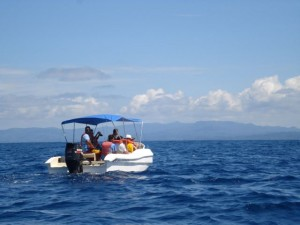 Bahia Aventuras I - Searching for Whales & Dolphins